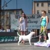 Joanna Sokołowska z psem rasy bulterier