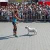 Pokaz umiejętności psów rasowych