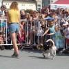 Prezentacja psów na wybiegu