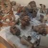 warsztaty z gliny
